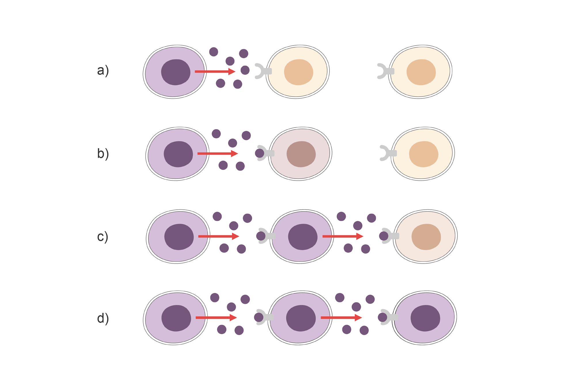 Cascade effect of cytokine release activating the next cell in line. Illustration.