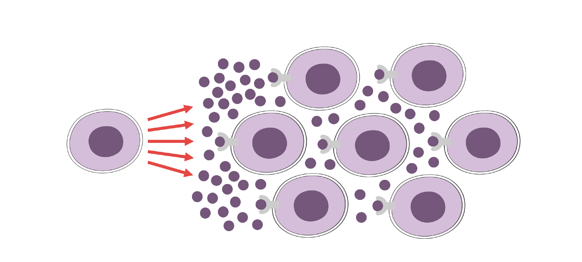 Cytokine storm with one cell releasing cytokines and activating too many cells. Illustration.