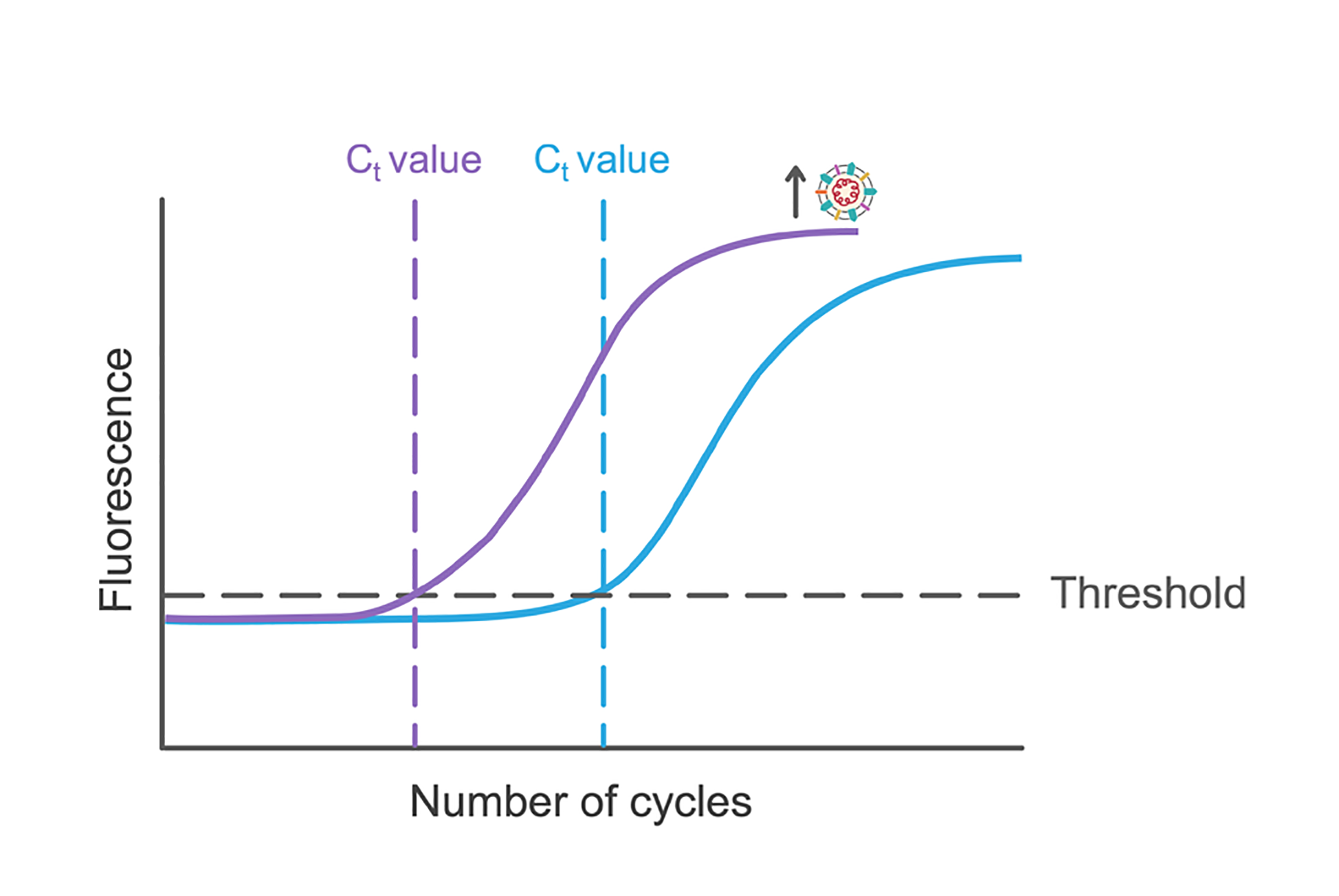 Graph of fluorescence vs number of PCR cycles. Illustration.