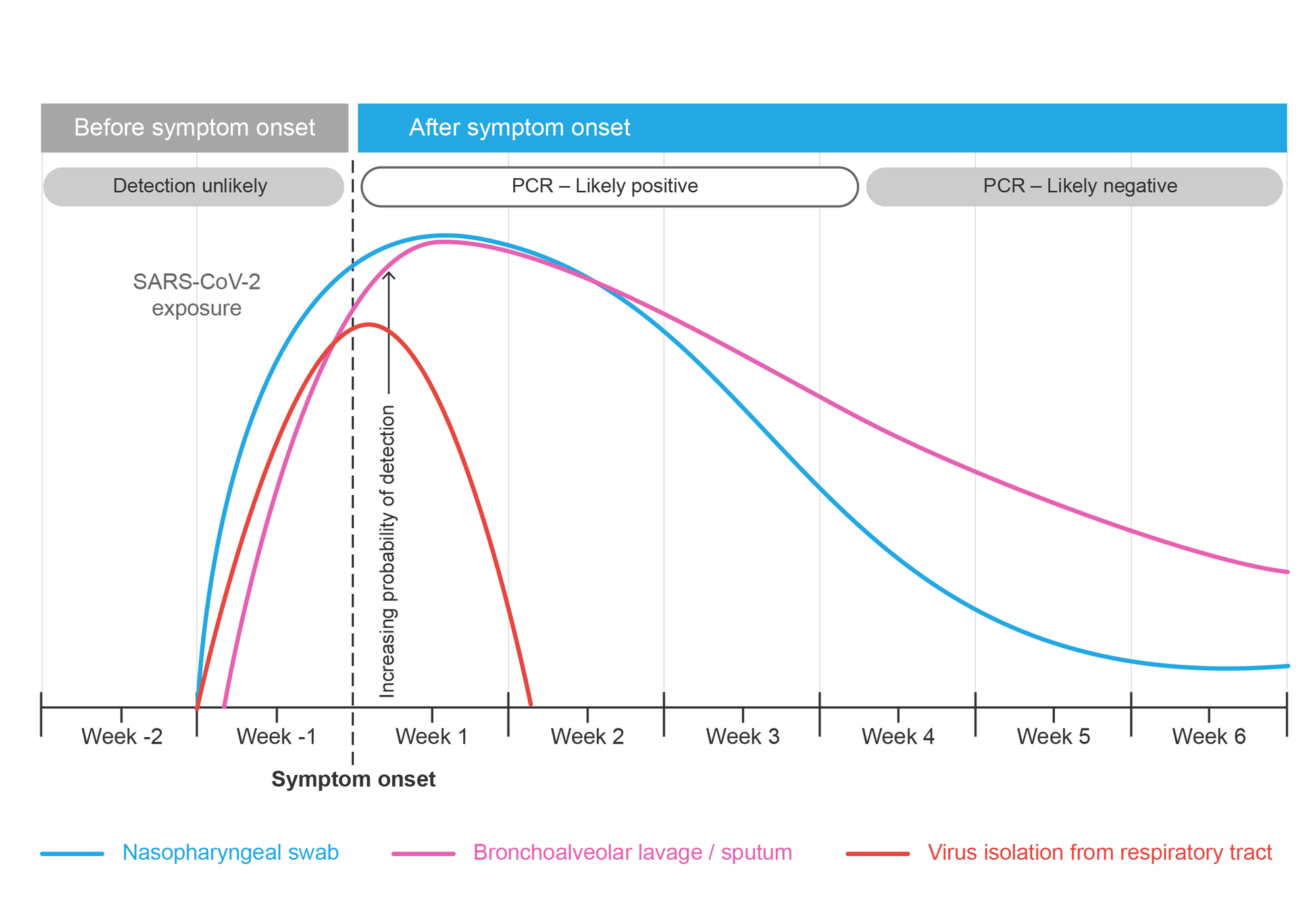 Graph comparing timeline for isolating SARS-CoV-2 in laboratory and positive RT-PCR results with nasopharyngeal and bronchoalveolar lavage or sputum specimens.