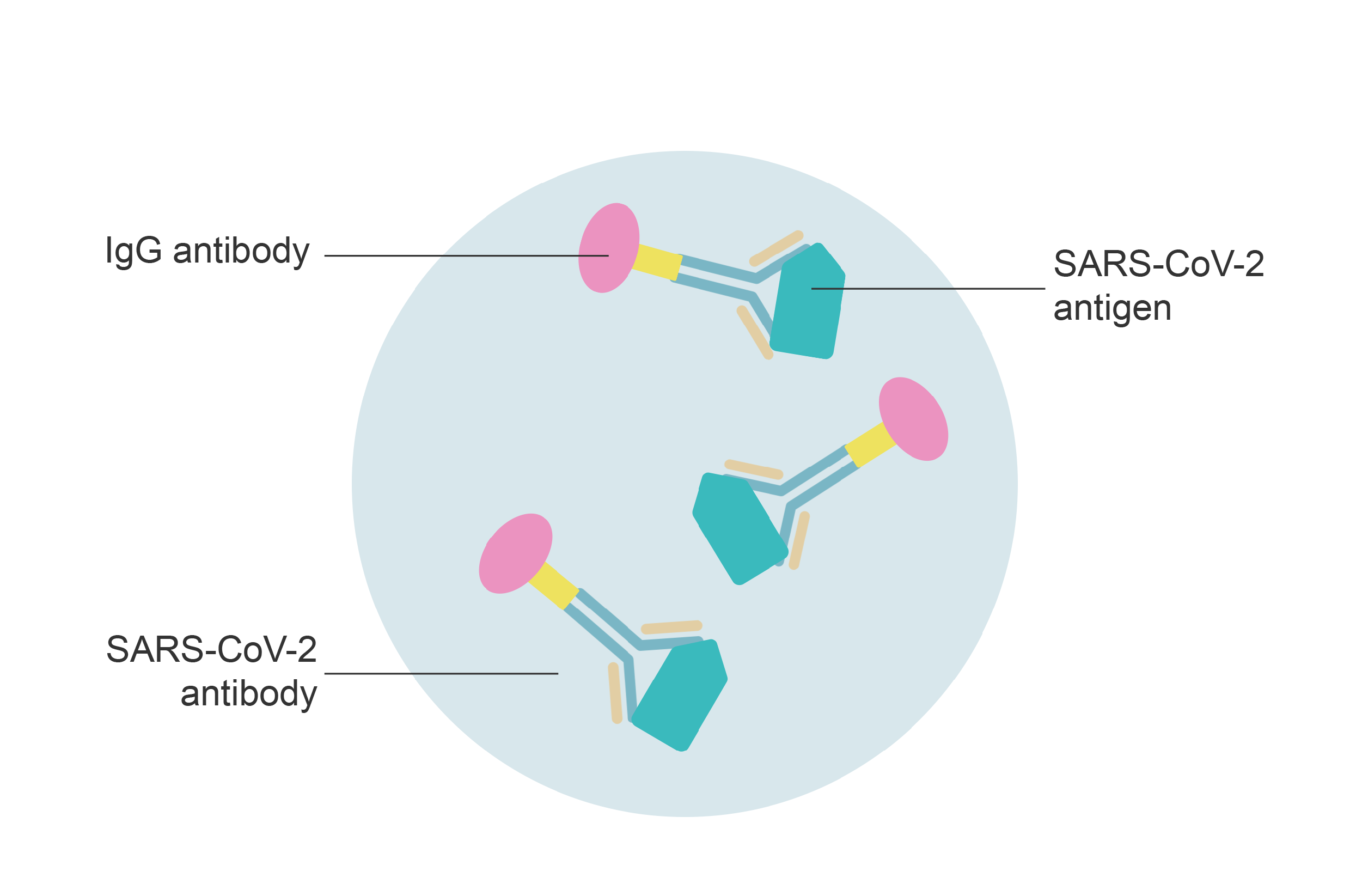 Microplate with SARS-CoV-2 antigens and antibodies, and IgG antibodies. Illustration