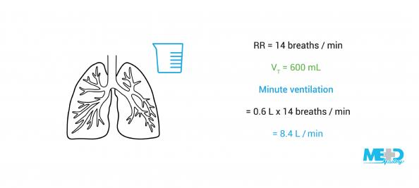 Lungs and volume flask with the calculation of minute ventilation based on volume.