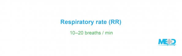 Respiratory rate, or RR, is set between ten and twenty breaths per minute. Text image.
